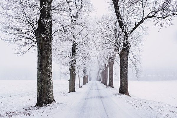 Vacker-vinterbild